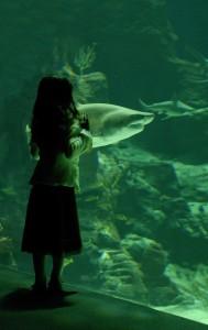 little girl and shark